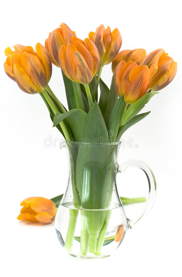 Vase of tulips royalty free stock photography