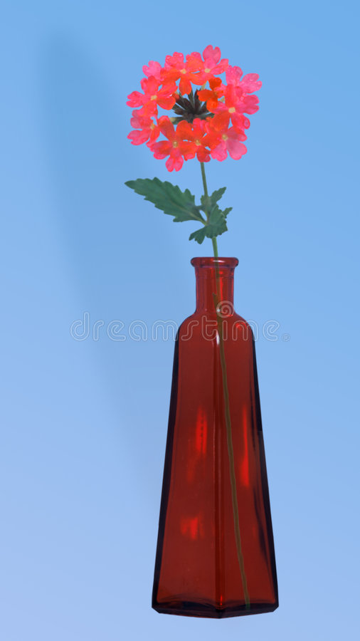 Vase Und Blumen Stockbild