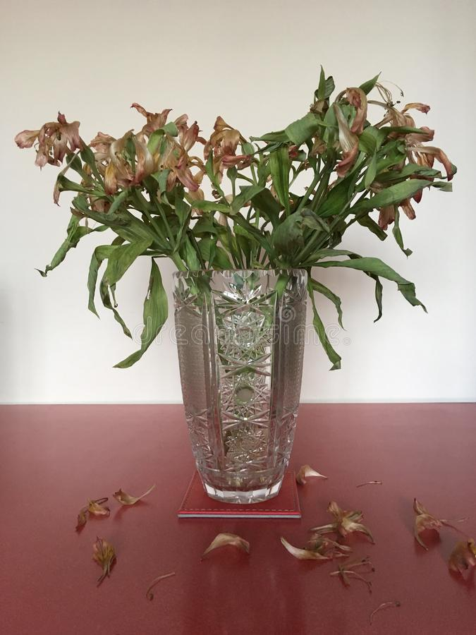 Vase of Wilted and Dead Flowers. Alstroemeria - Vase of dying and wilted flowers royalty free stock image