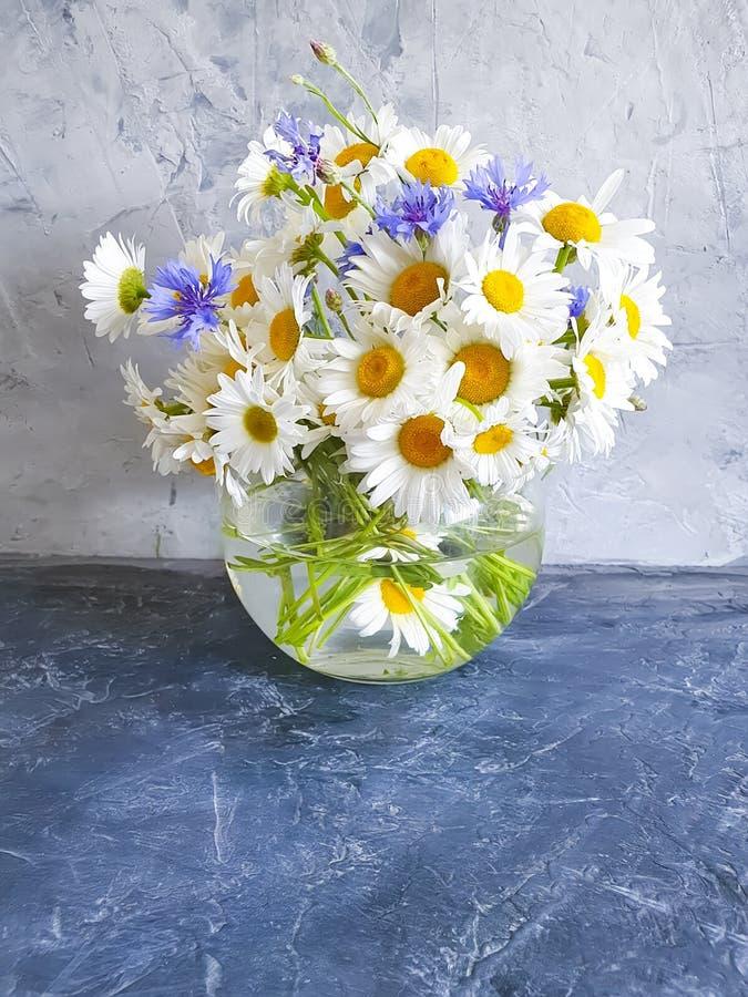 Vasengänseblümchenblume, selbst gemachte Innenkornblume auf konkretem Hintergrund stockfoto