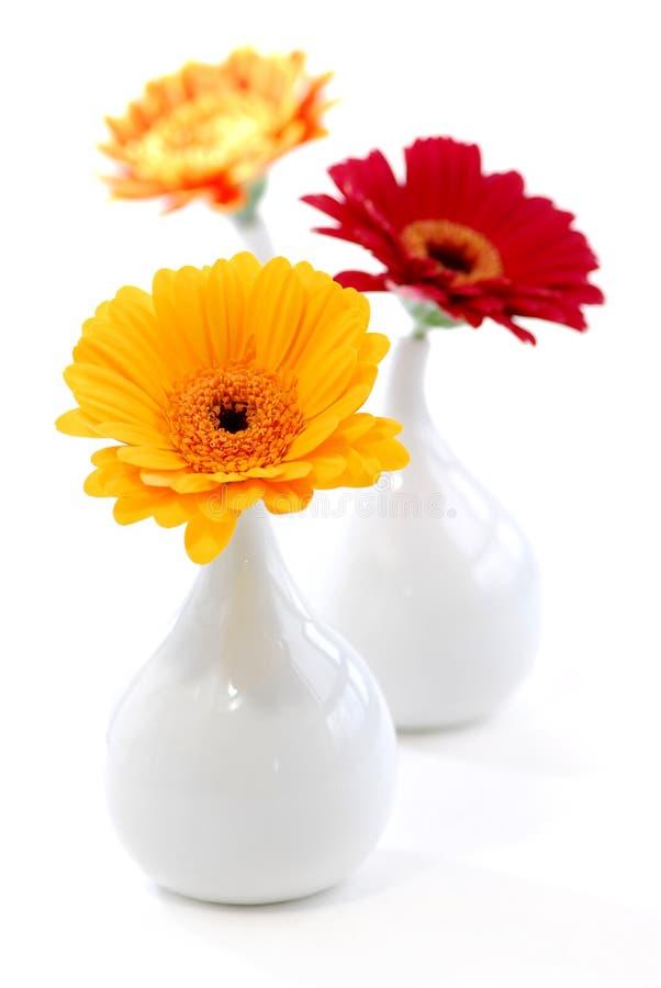 Vases à conception intérieure image stock
