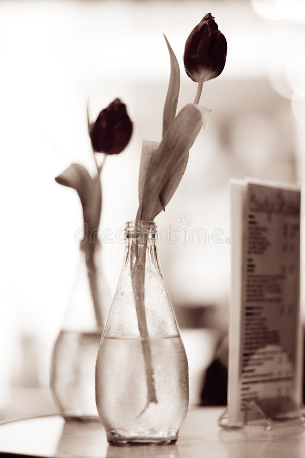 Vases photos libres de droits
