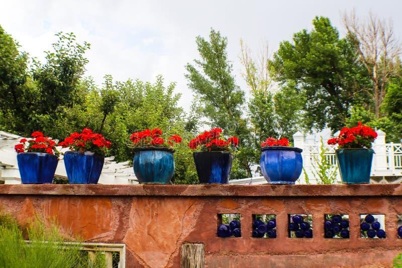 Vasi blu in pieno dei gerani rossi che si siedono sulla parete rustica artistica della roccia con gli alberi dietro fotografia stock