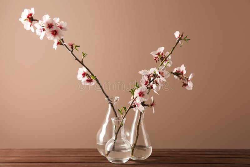 Vasi con i bei rami sboccianti sulla tavola contro il fondo di colore fotografia stock