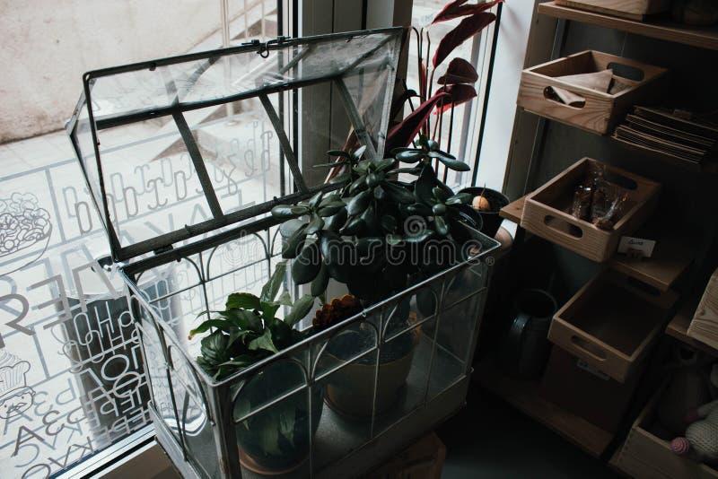 Vasi con le piante della casa sullo scaffale nella sala Scaffali con i vasi dei fiori Interno elegante e scuro immagine stock libera da diritti