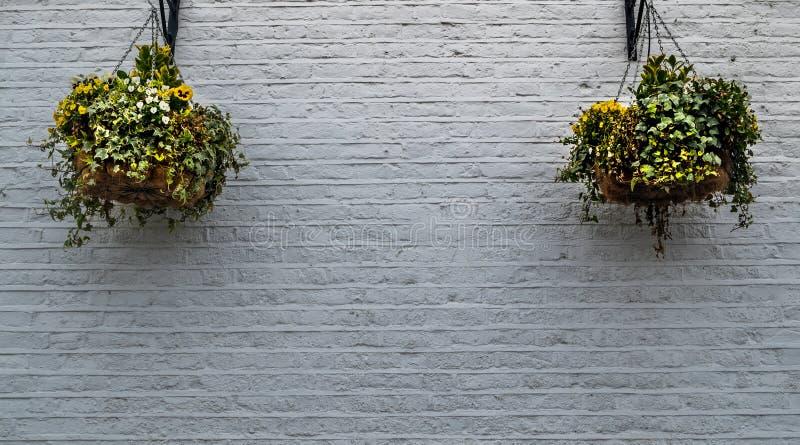 2 vasi da fiori che appendono su un muro di mattoni bianco fuori della casa immagine stock libera da diritti