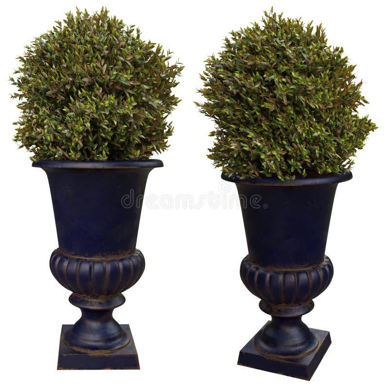 Vasi da fiori decorativi fotografia stock