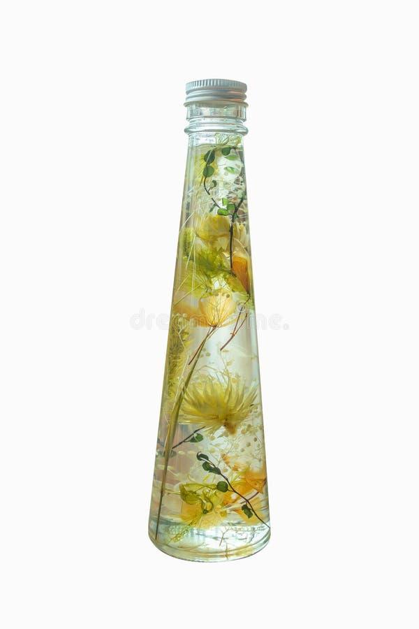 Vasi da fiori di vetro su fondo bianco isolato Bei piante verdi e fiore in vasi di vetro rotondi immagine stock