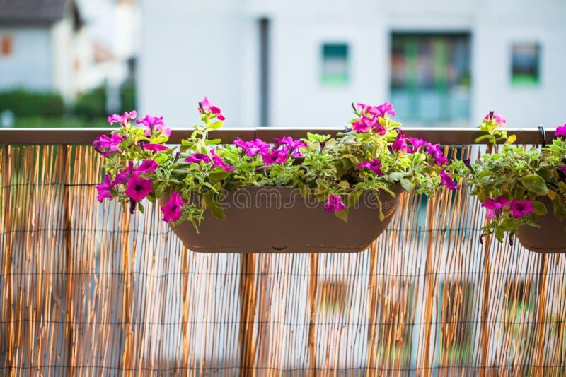 Vasi del giardino del balcone di estate con i fiori della petunia fotografie stock