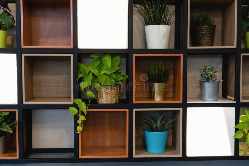 Vasi della pianta disposti sullo scaffale di legno allegato alla parete fotografia stock libera da diritti