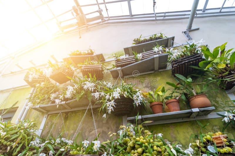 Vasi della serra sugli scaffali e la parete dei fiori della costruzione immagine stock libera da diritti