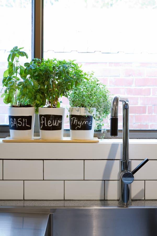 Vasi delle erbe sul verticale contemporaneo del davanzale della finestra della cucina fotografia stock libera da diritti