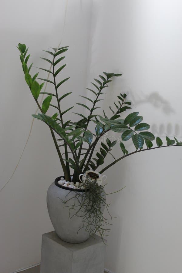 Vaso artificiale della pianta del cemento con la pianta d'appartamento fotografie stock libere da diritti