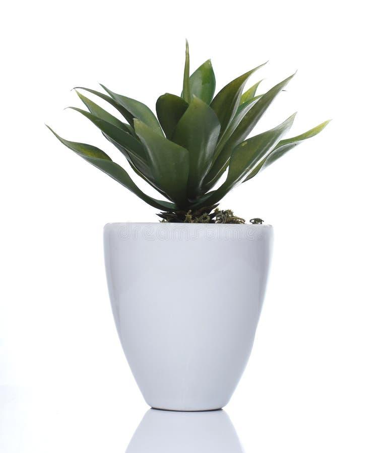 Vaso artificiale di bianco della pianta fotografia stock libera da diritti