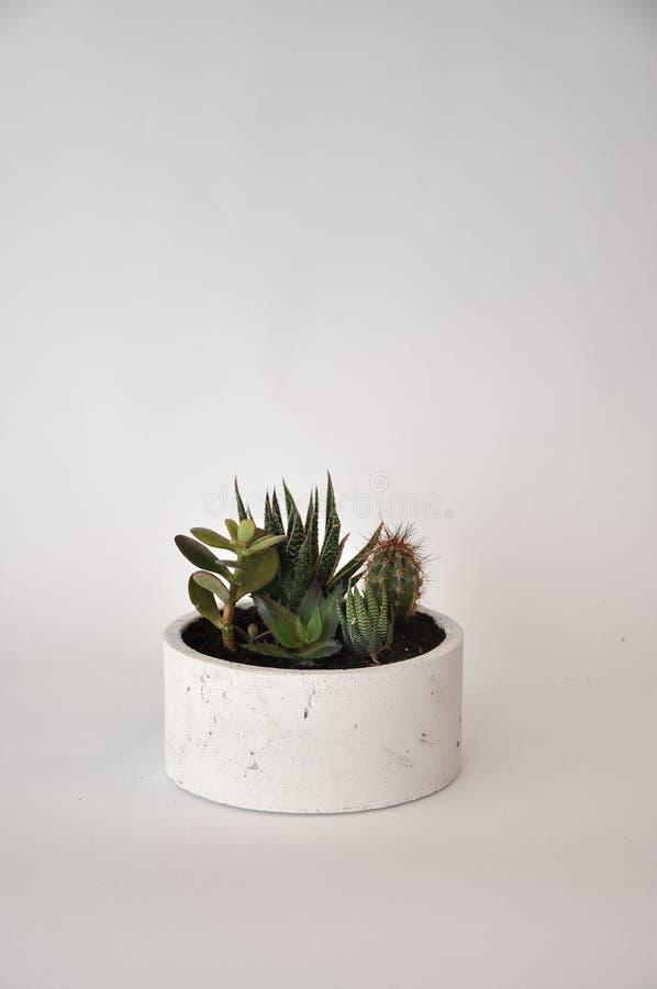 Vaso bianco concreto della piantatrice del cilindro fotografia stock libera da diritti