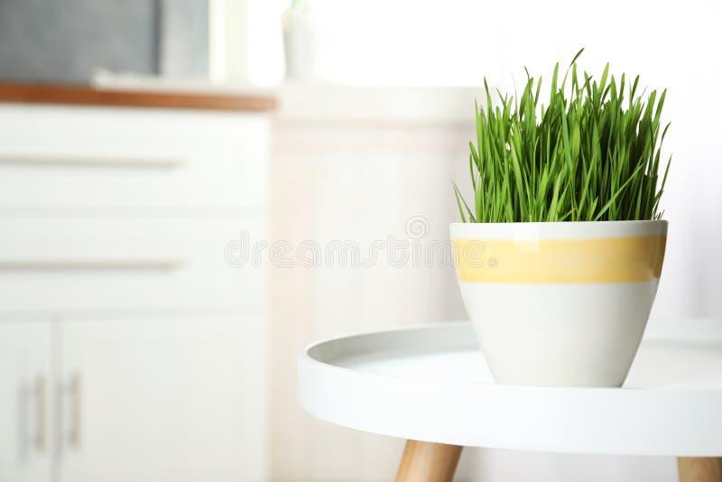 Vaso ceramico con l'erba fresca del grano sulla tavola contro fondo vago immagini stock