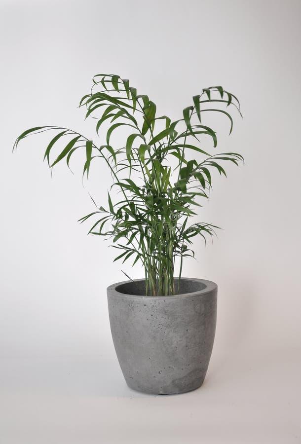 Vaso classico concreto della piantatrice fotografie stock
