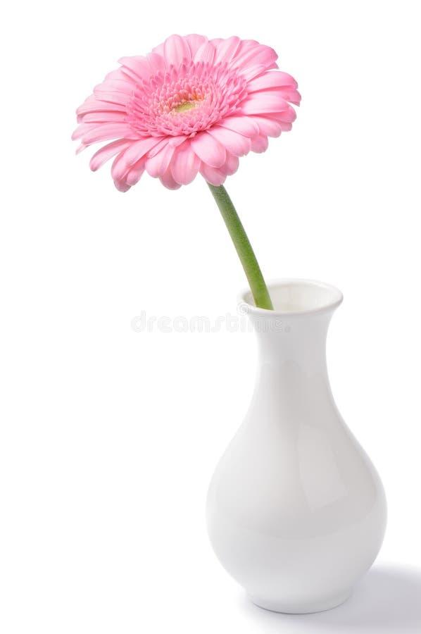 Vaso com crisântemo cor-de-rosa fotografia de stock