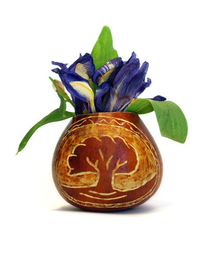 Download Vaso com flores azuis foto de stock. Imagem de front - 10061550