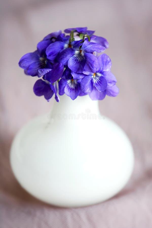 Vaso com violetas foto de stock royalty free