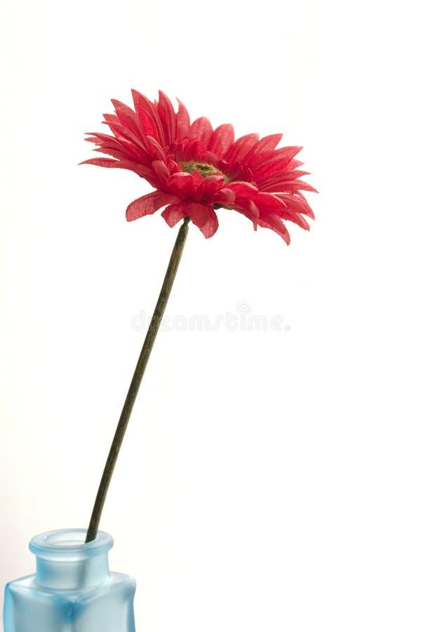 Vaso con il fiore fotografie stock