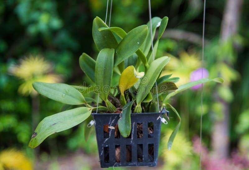 Vaso con la pianta crescente fotografie stock