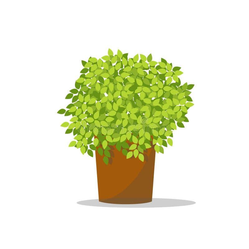 Vaso da fiori decorativo Guarnizione dell'albero verde sul vaso illustrazione di stock