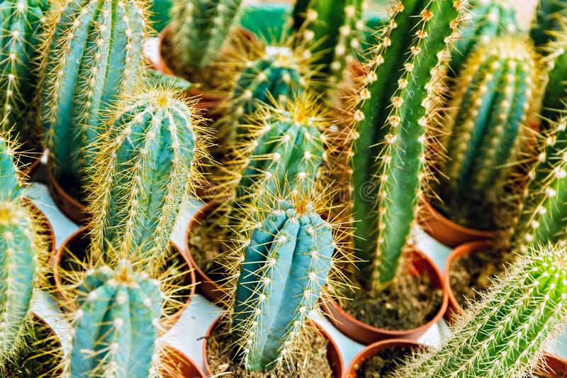 vaso da fiori del cactus immagini stock