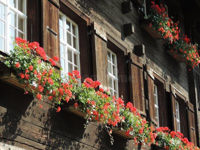Vaso da fiori della finestra di cabina del ceppo fotografia stock