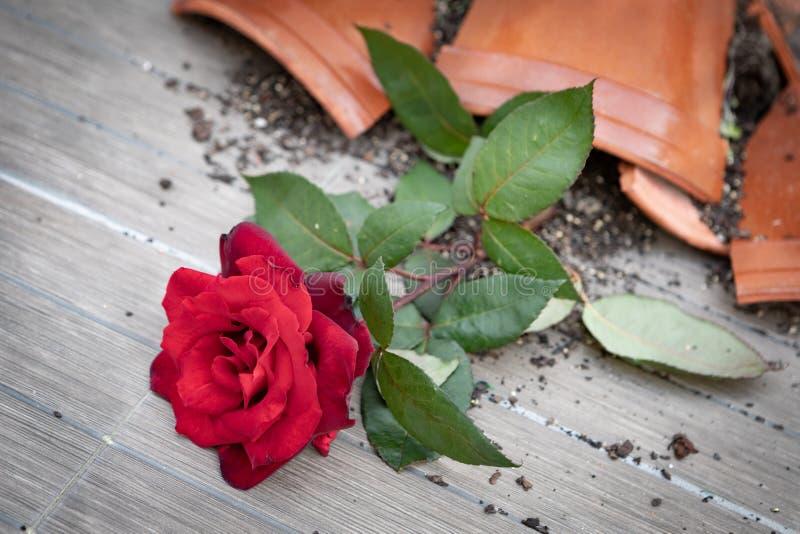 Vaso da fiori rotto con una rosa rossa fotografia stock libera da diritti