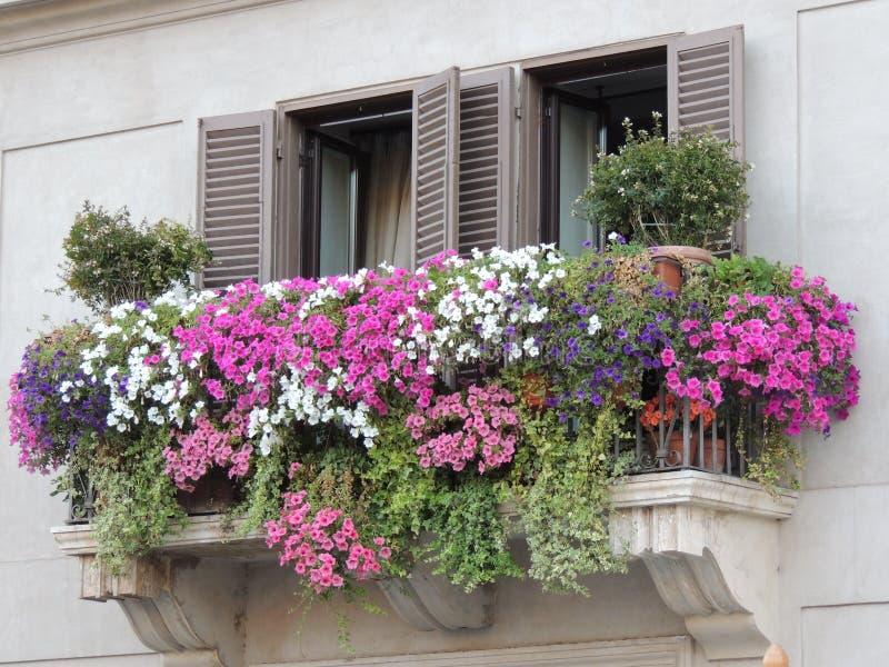 Vaso da fiori variopinto della finestra fotografie stock