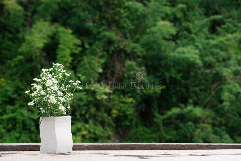Vaso de flor branca na tabela de madeira velha de Brown Conceito da natureza Fundo da natureza foto de stock