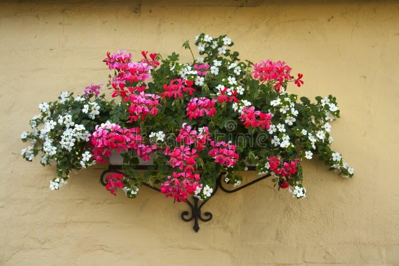 Well-known Vaso De Flores Clássico Do Plantador Em Uma Parede De Tijolos Foto  JR08