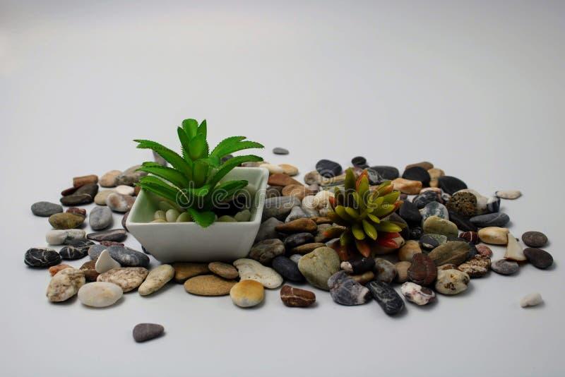 Vaso de flores pequeno com planta imagens de stock