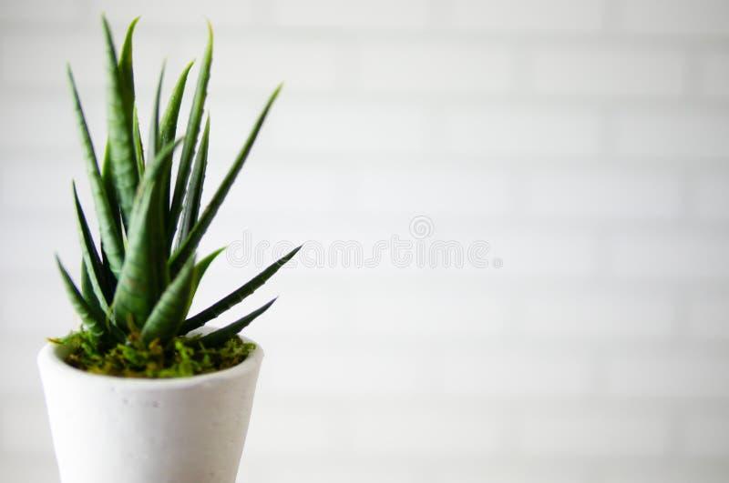 Vaso de flores verde bonito na frente do papel de parede do teste padrão do tijolo no escritório ou na casa moderna imagens de stock