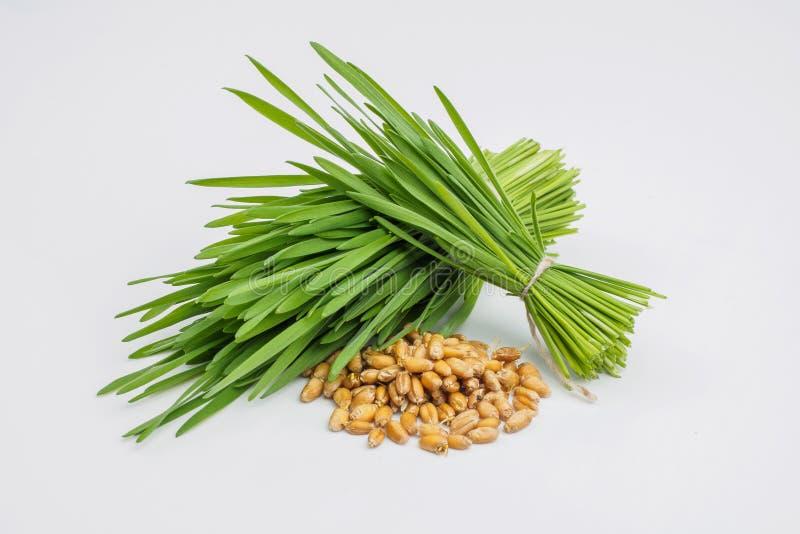 Vaso de medida de hierba del trigo con la hierba y el trigo frescos g del trigo del corte imágenes de archivo libres de regalías