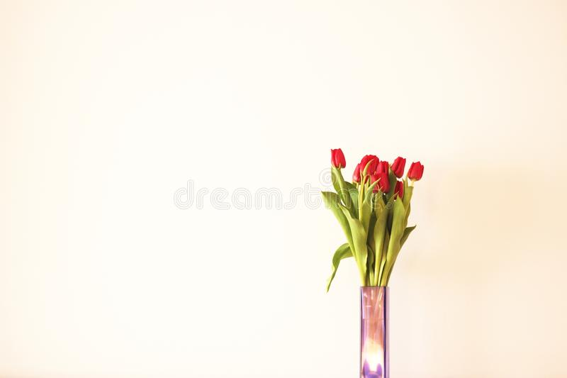Vaso de tulips vermelhos fotografia de stock royalty free