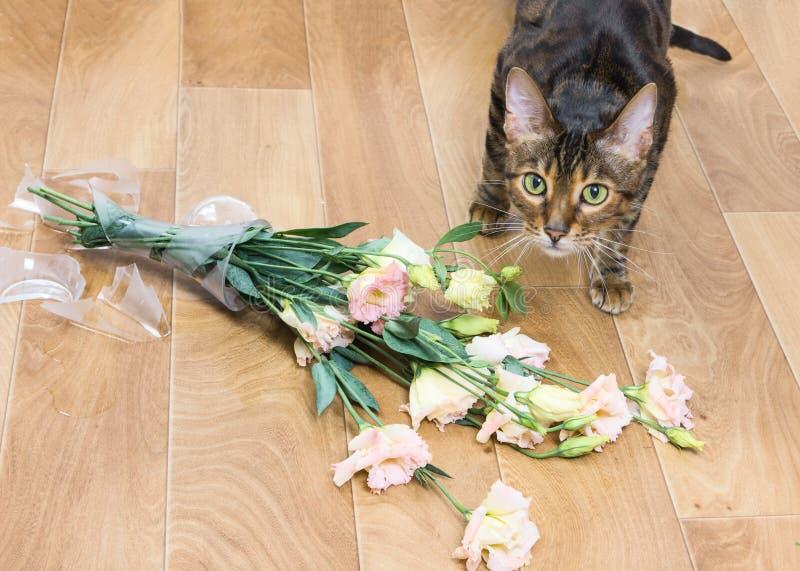 Vaso de vidro deixado cair e quebrado do toyger da raça do gato das flores fotografia de stock