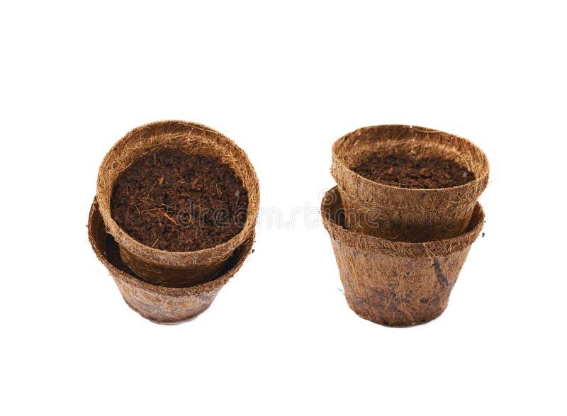 Vaso degradabile della noce di cocco isolato fotografia stock