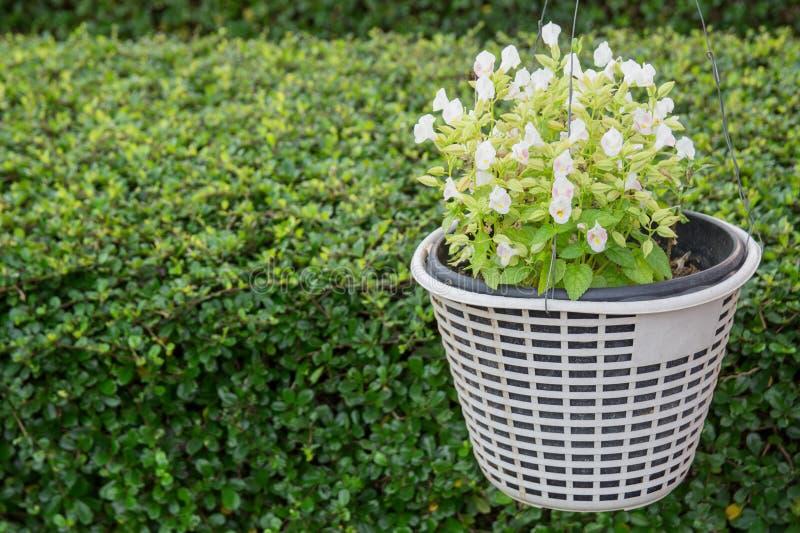 Vaso dei fiori con un fondo verde immagini stock libere da diritti
