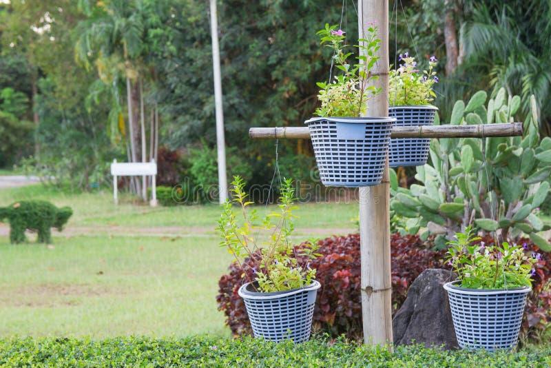 Vaso dei fiori con un fondo verde fotografia stock
