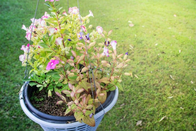 Vaso dei fiori con un fondo verde fotografia stock libera da diritti