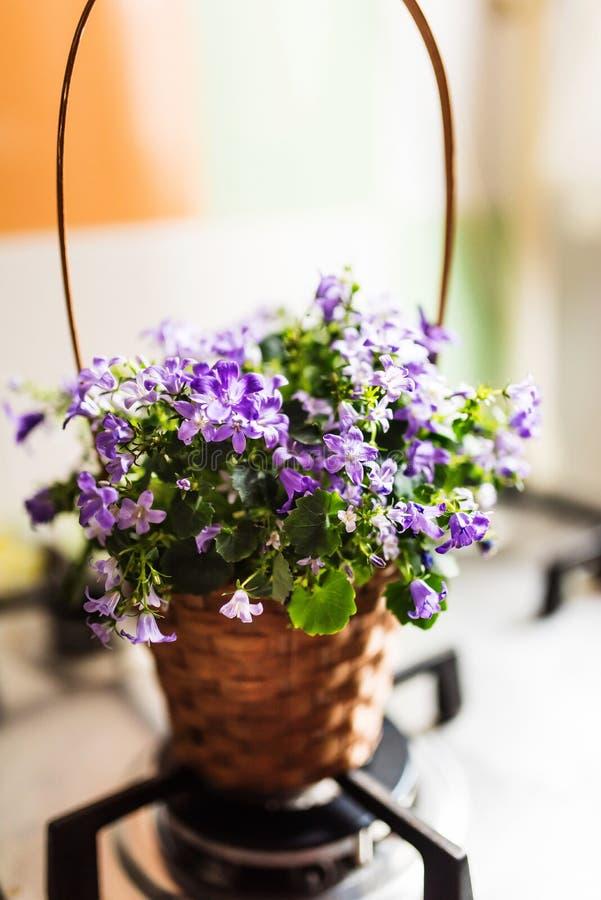 Vaso del canestro con i fiori della campanula fotografia stock libera da diritti