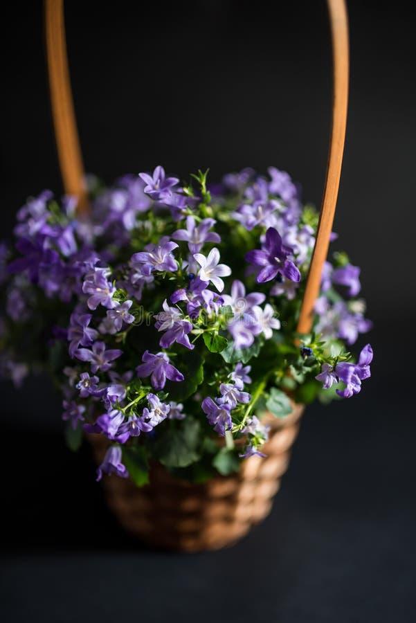 Vaso del canestro con i fiori della campanula fotografia stock