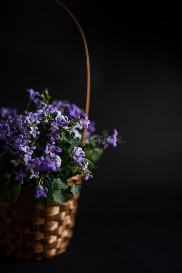 Vaso del canestro con i fiori della campanula fotografie stock libere da diritti