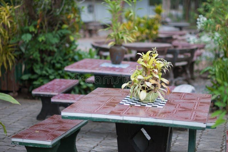 Vaso della pianta sulla tavola in giardino fotografia stock libera da diritti