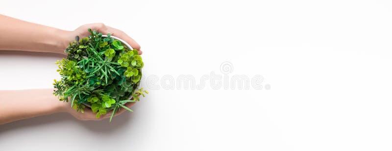 Vaso della tenuta del giardiniere con la miscela delle piante, spazio della copia immagine stock