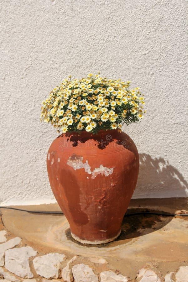 Vaso di argilla con i fiori gialli minuscoli fotografia stock libera da diritti