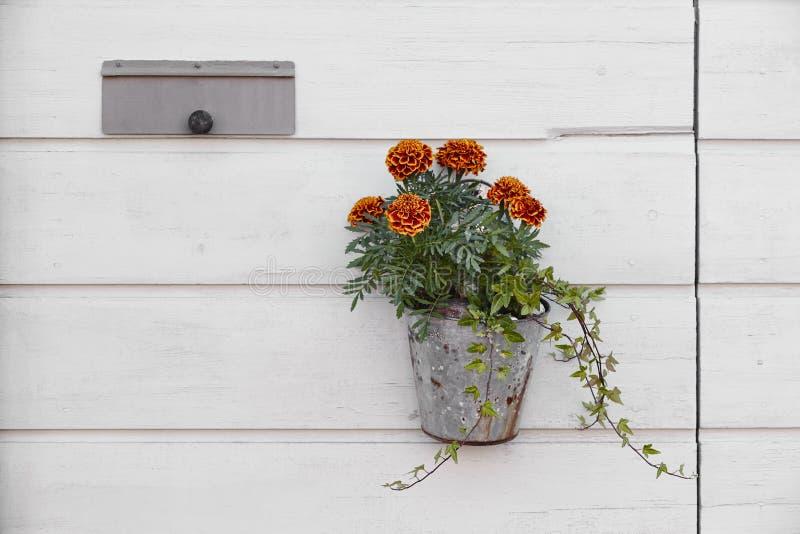 Vaso di fiore che appende su una parete di legno bianca Insieme della decorazione immagini stock libere da diritti