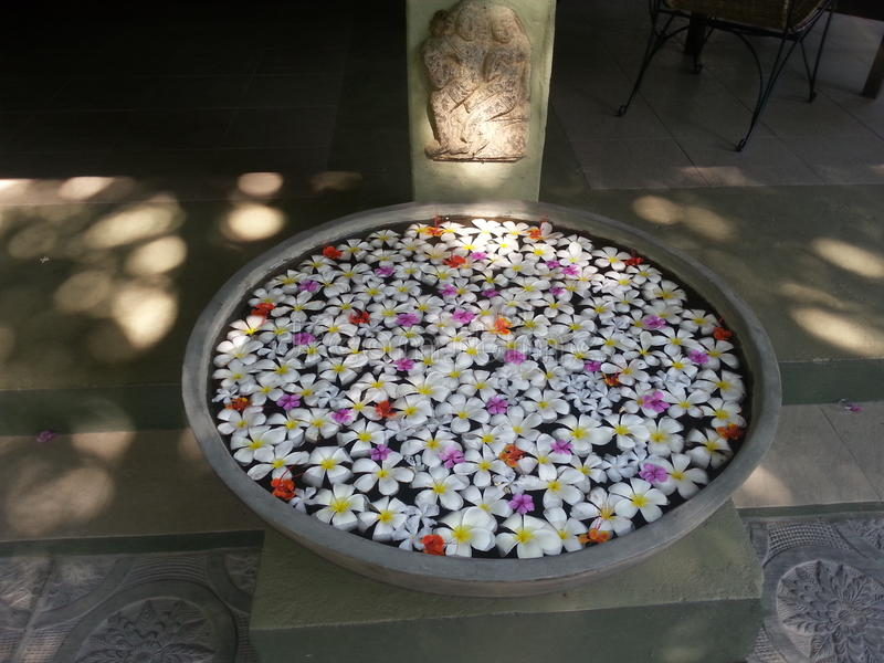 Vaso di fiore dello Sri Lanka immagine stock libera da diritti
